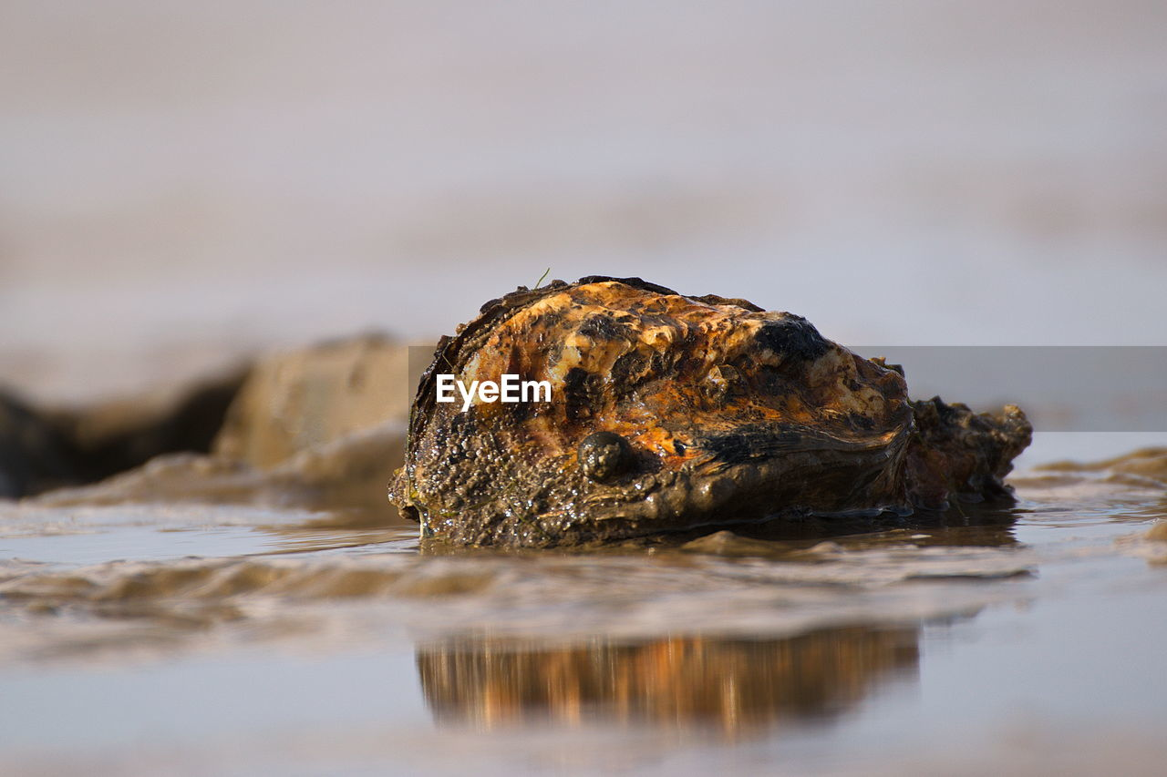 selective focus, water, no people, close-up, waterfront, nature, animal, outdoors, day, animal wildlife, sea, solid, animal themes, rock - object, animals in the wild, rock, wood - material, one animal, beauty in nature, surface level, marine