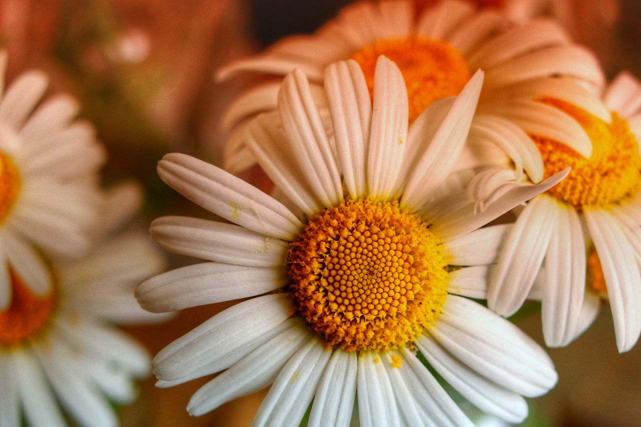 fragility, flower, flowering plant, vulnerability, freshness, petal, beauty in nature, inflorescence, flower head, close-up, pollen, plant, growth, yellow, focus on foreground, nature, no people, day, daisy