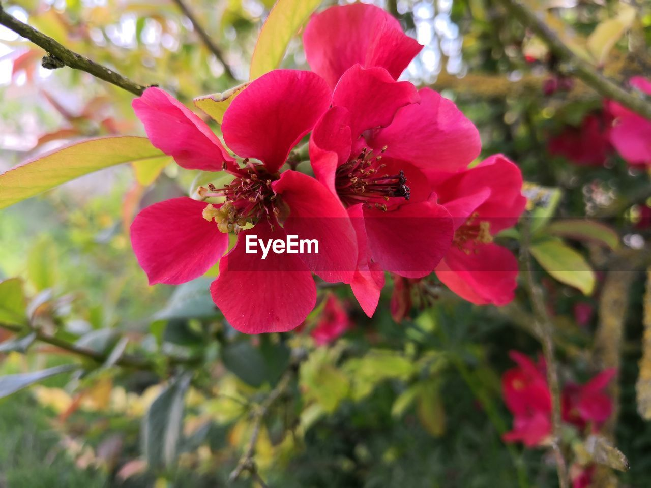 flowering plant, flower, fragility, plant, vulnerability, beauty in nature, growth, petal, freshness, close-up, invertebrate, flower head, animal themes, insect, animal, one animal, inflorescence, animal wildlife, animals in the wild, bee, no people, pollen, pollination, outdoors