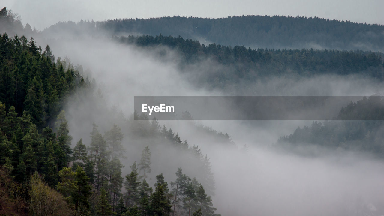 Scenic View Of Trees In Foggy Weather Against Sky