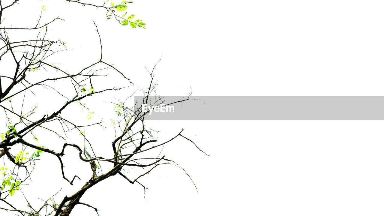 tree, sky, plant, clear sky, branch, bare tree, no people, tranquility, beauty in nature, copy space, low angle view, nature, outdoors, day, scenics - nature, silhouette, tranquil scene, growth, single tree, vertebrate