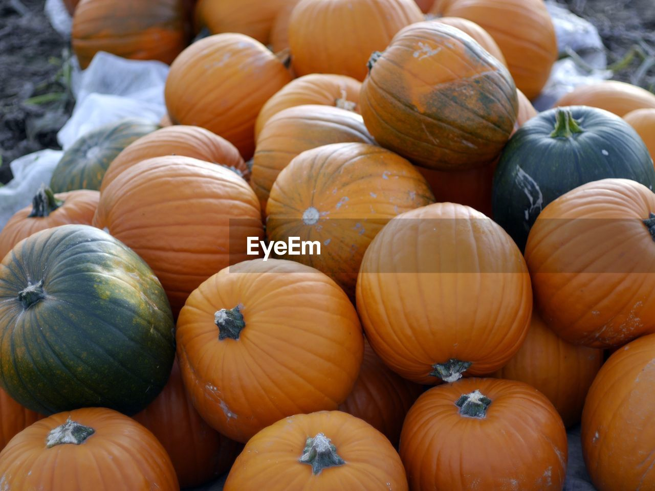 food and drink, food, freshness, healthy eating, wellbeing, vegetable, pumpkin, market, for sale, large group of objects, no people, retail, still life, high angle view, orange color, market stall, abundance, close-up, day, full frame, outdoors, retail display, sale, vegetarian food, ripe