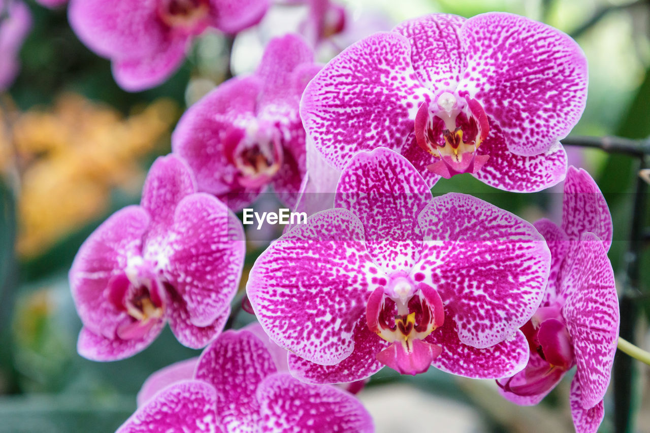 flowering plant, flower, vulnerability, fragility, plant, petal, freshness, growth, beauty in nature, close-up, inflorescence, flower head, pink color, focus on foreground, day, nature, no people, selective focus, orchid, outdoors, pollen