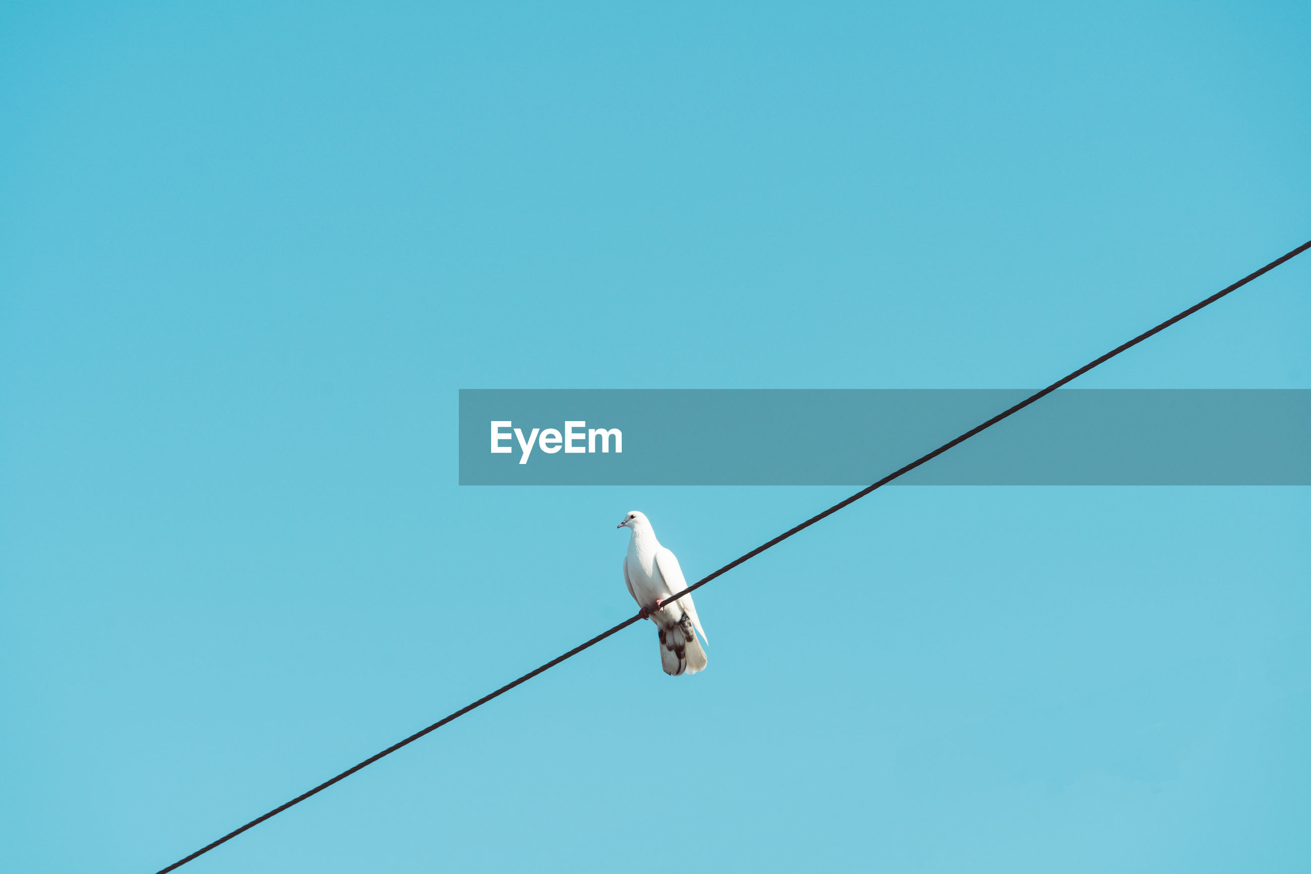 Low angle view of bird perching on cable against clear blue sky