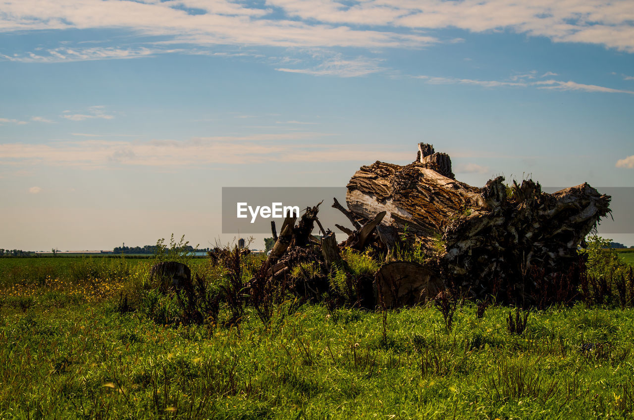 plant, land, sky, grass, tranquil scene, cloud - sky, field, tranquility, beauty in nature, environment, landscape, nature, scenics - nature, green color, tree, non-urban scene, growth, no people, day, mammal, outdoors