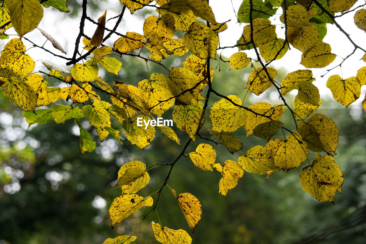 yellow, branch, beauty in nature, nature, growth, day, no people, leaf, tree, low angle view, outdoors, fragility, close-up, flower, freshness