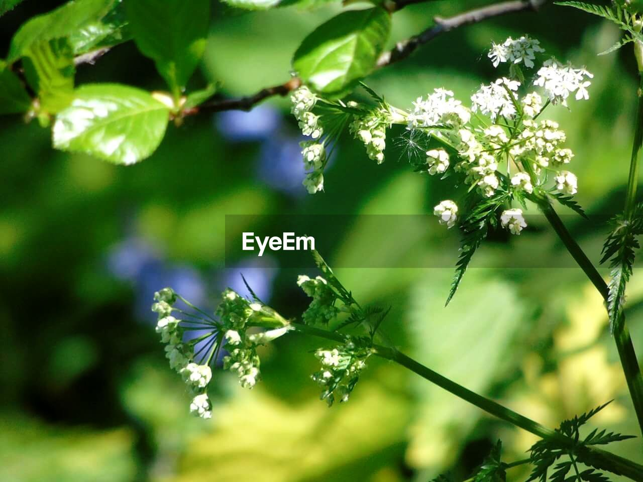 growth, nature, flower, plant, no people, beauty in nature, fragility, outdoors, freshness, day, leaf, close-up, tree