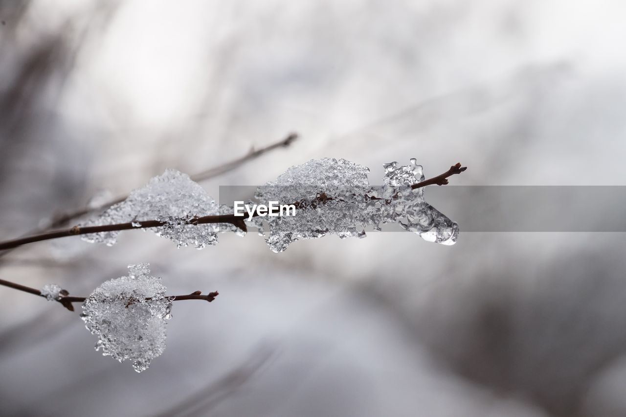 cold temperature, winter, frozen, snow, weather, ice, fragility, nature, close-up, frost, beauty in nature, white color, no people, day, drop, outdoors, icicle, ice crystal, leaf, branch, water, freshness, sky