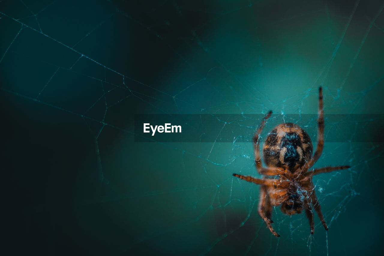 spider web, animal themes, spider, arachnid, one animal, invertebrate, fragility, animal wildlife, animal, arthropod, animals in the wild, insect, close-up, vulnerability, focus on foreground, zoology, day, nature, selective focus, animal leg, no people, outdoors, complexity, web