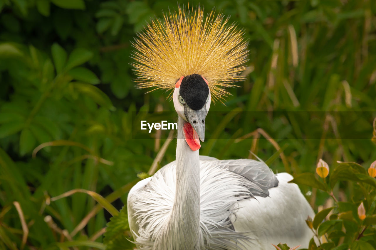 animal themes, animals in the wild, animal, vertebrate, animal wildlife, bird, one animal, crane - bird, no people, focus on foreground, close-up, day, nature, green color, plant, field, beauty in nature, beak, outdoors, land, animal neck
