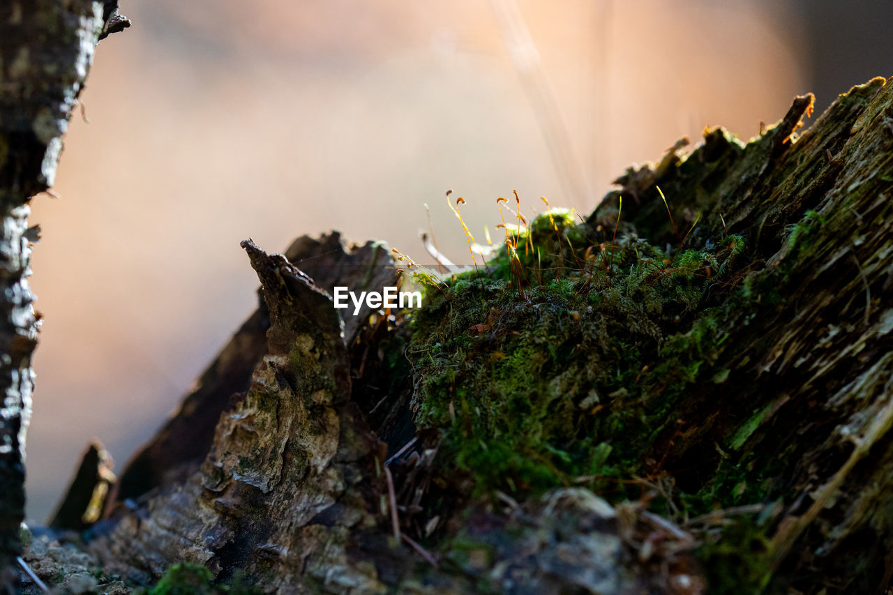 plant, nature, moss, close-up, day, selective focus, no people, tree, growth, focus on foreground, animals in the wild, outdoors, animal wildlife, fragility, plant part, tree trunk, leaf, wood - material, beauty in nature, vulnerability, bark