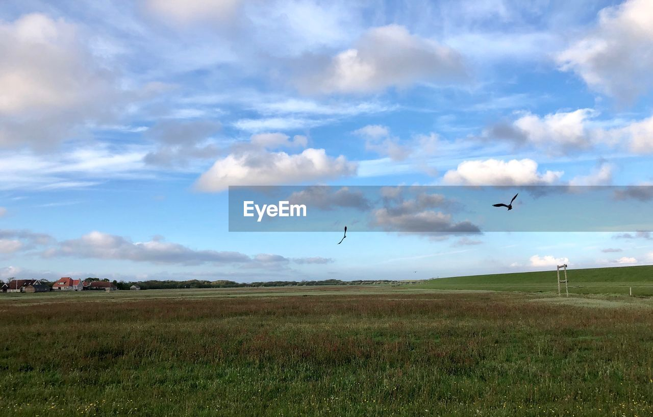 sky, land, field, cloud - sky, grass, flying, plant, landscape, environment, bird, animal themes, beauty in nature, vertebrate, nature, scenics - nature, animal, tranquil scene, mid-air, tranquility, animals in the wild, no people, outdoors