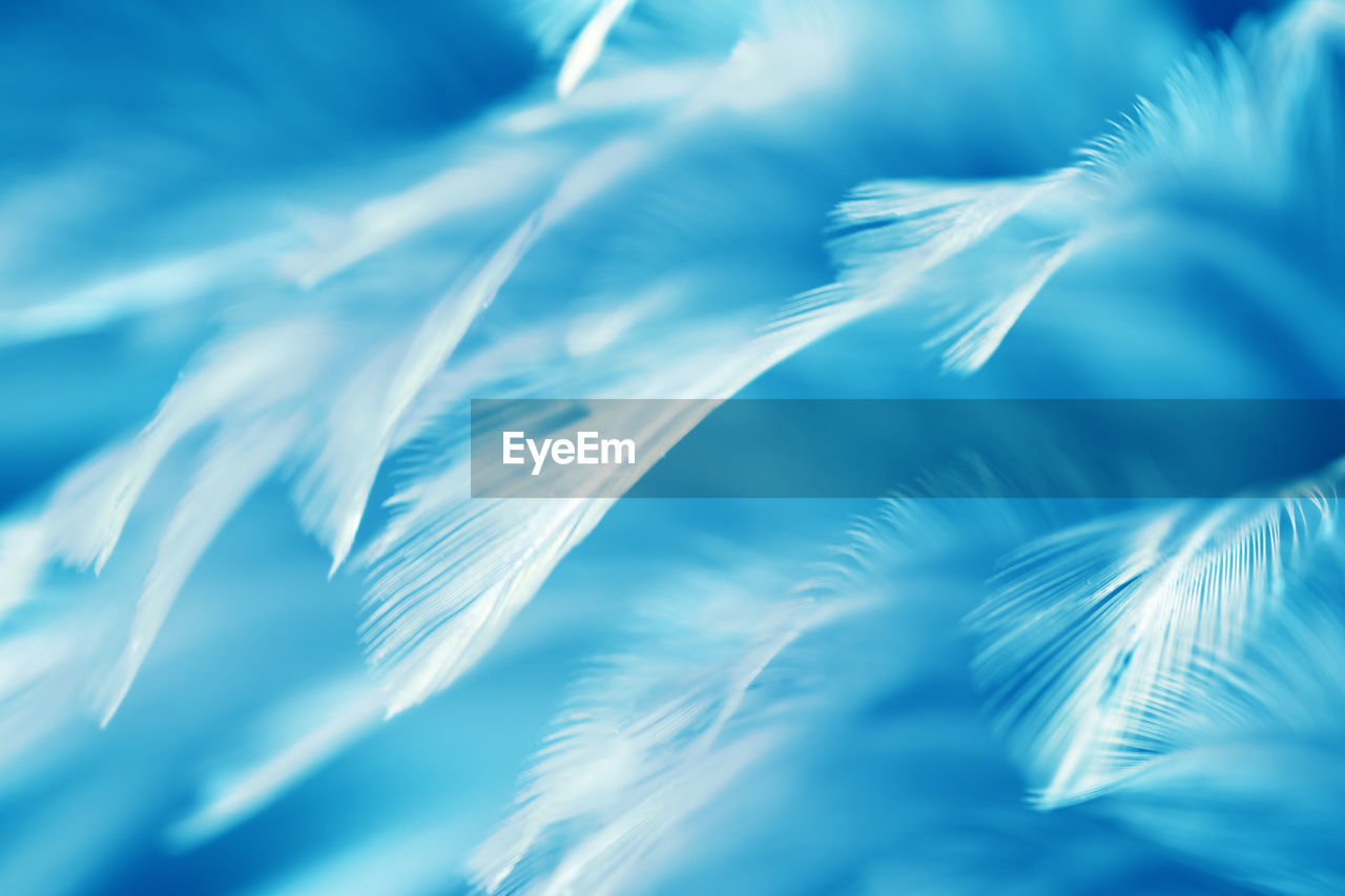 no people, full frame, nature, day, beauty in nature, backgrounds, close-up, feather, selective focus, softness, lightweight, white color, animal, animal wildlife, animal themes, natural pattern, vulnerability, blue, pattern, fragility, purity, marine