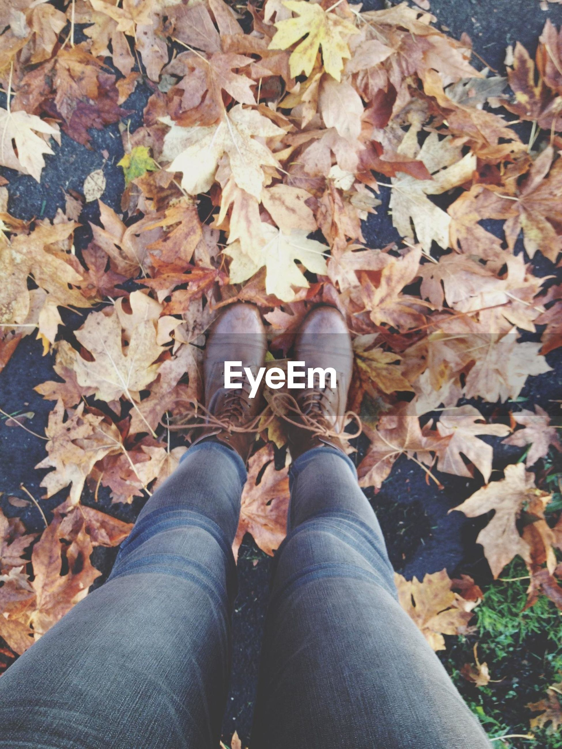 low section, person, personal perspective, shoe, leaf, autumn, high angle view, human foot, lifestyles, footwear, standing, jeans, leaves, change, leisure activity, men, season