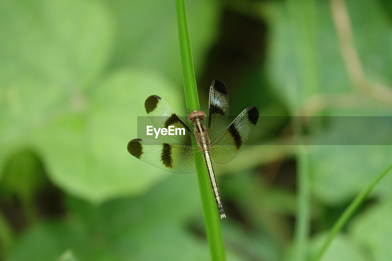 plant, growth, beauty in nature, close-up, animals in the wild, animal wildlife, nature, focus on foreground, day, invertebrate, insect, green color, animal, no people, animal themes, one animal, animal wing, plant stem, selective focus, flower, outdoors, butterfly - insect