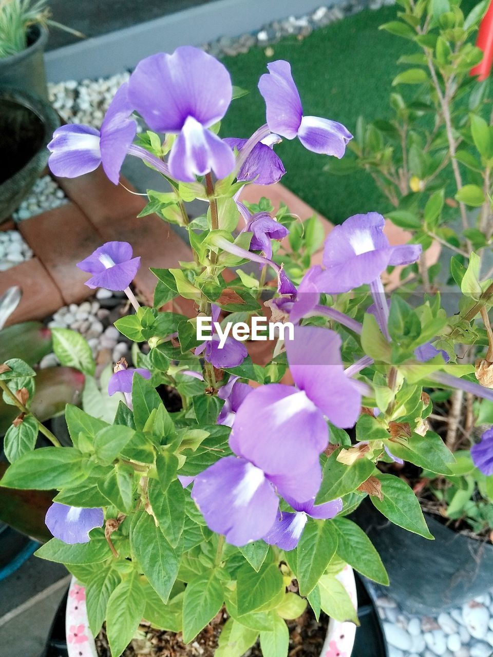 Plant Nature Growth Flower Beauty In Nature High Angle View Outdoors Fragility Petal Purple Day No People Freshness Leaf Blooming Close-up Flower Head