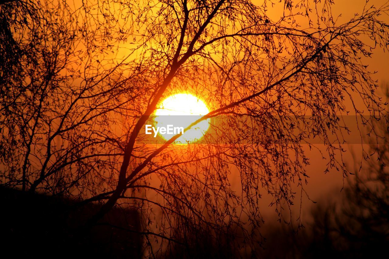 sky, orange color, sun, sunset, beauty in nature, plant, tree, nature, tranquility, branch, scenics - nature, tranquil scene, silhouette, no people, outdoors, idyllic, low angle view, sunlight, growth, bare tree