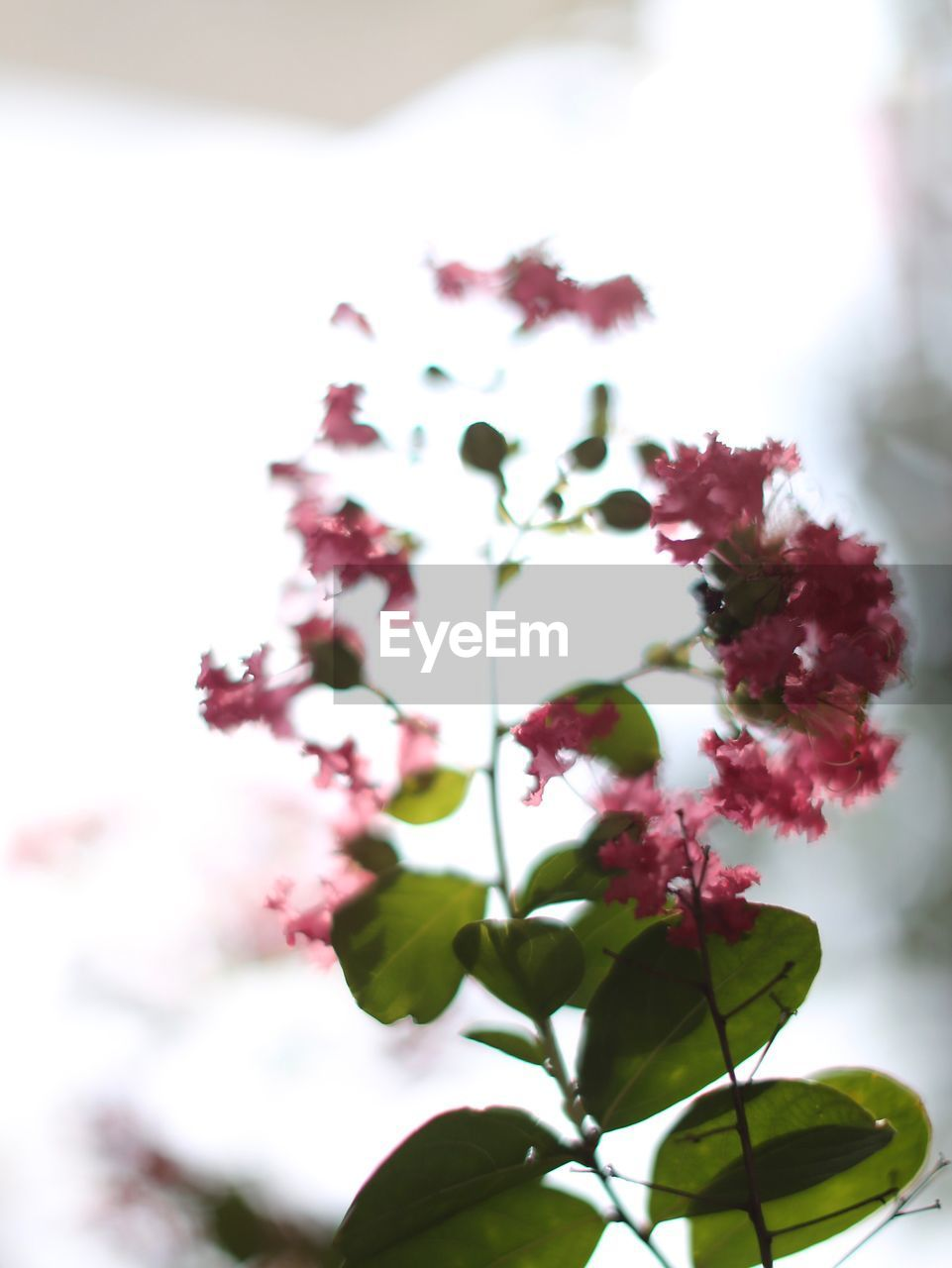 flower, growth, nature, beauty in nature, fragility, freshness, plant, no people, petal, focus on foreground, close-up, day, outdoors, flower head, blooming, tree