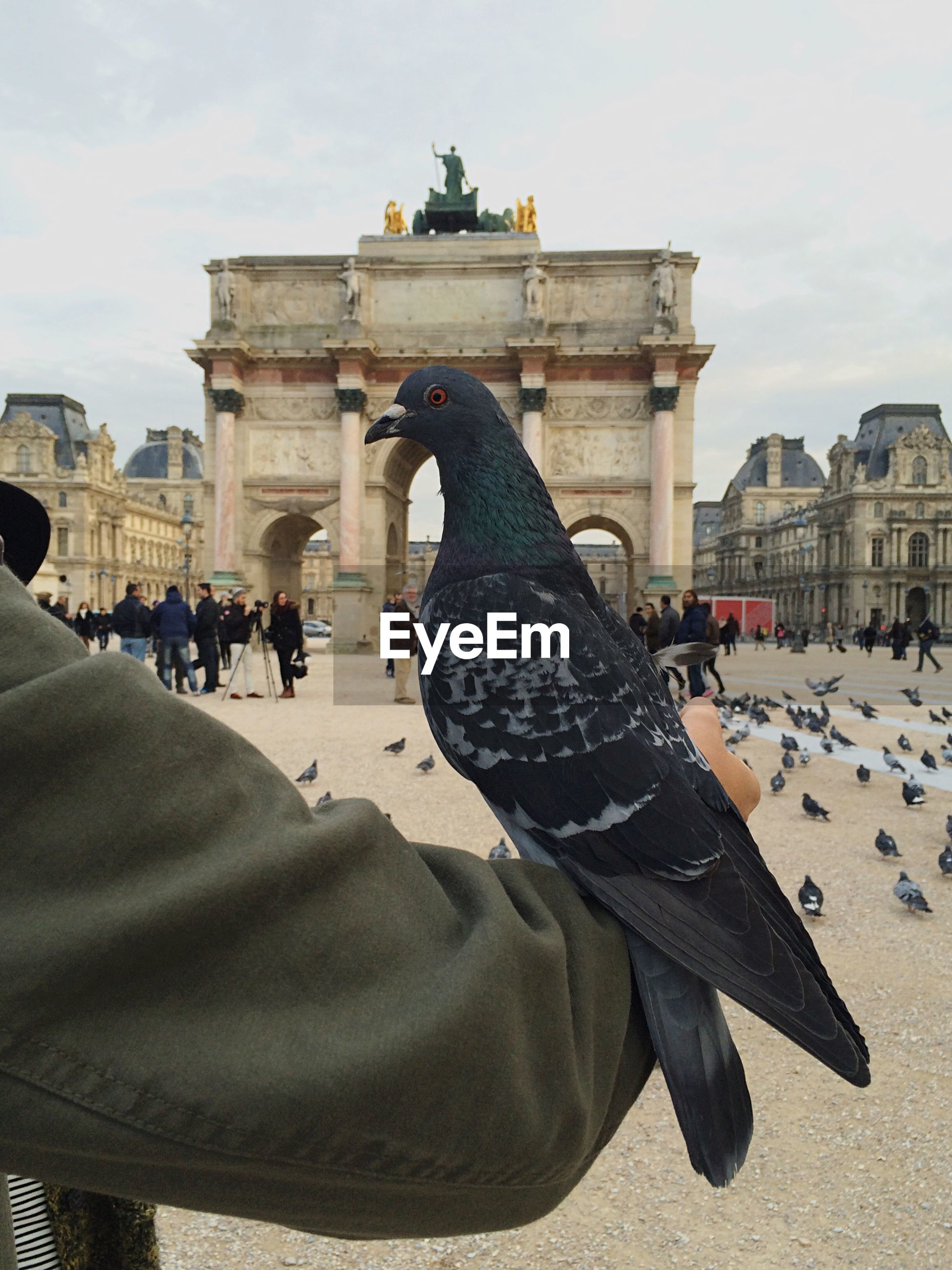 Pigeon perching on person hand at arc de triomphe du carrousel