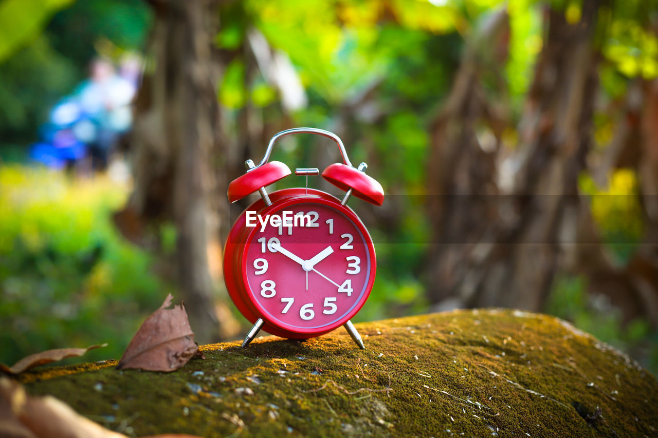 time, clock, alarm clock, red, focus on foreground, number, tree, clock face, plant, close-up, no people, day, outdoors, leaf, plant part, accuracy, nature, instrument of time, single object, shape, minute hand, hour hand