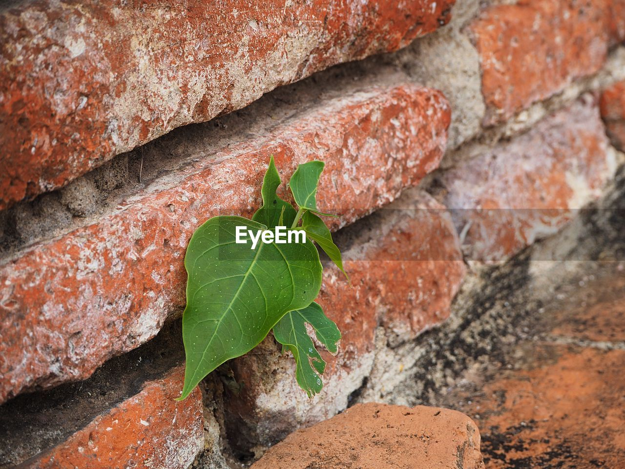leaf, plant part, close-up, brick, no people, brick wall, wall - building feature, nature, plant, focus on foreground, day, wall, outdoors, green color, selective focus, textured, freshness, red, high angle view, architecture, concrete