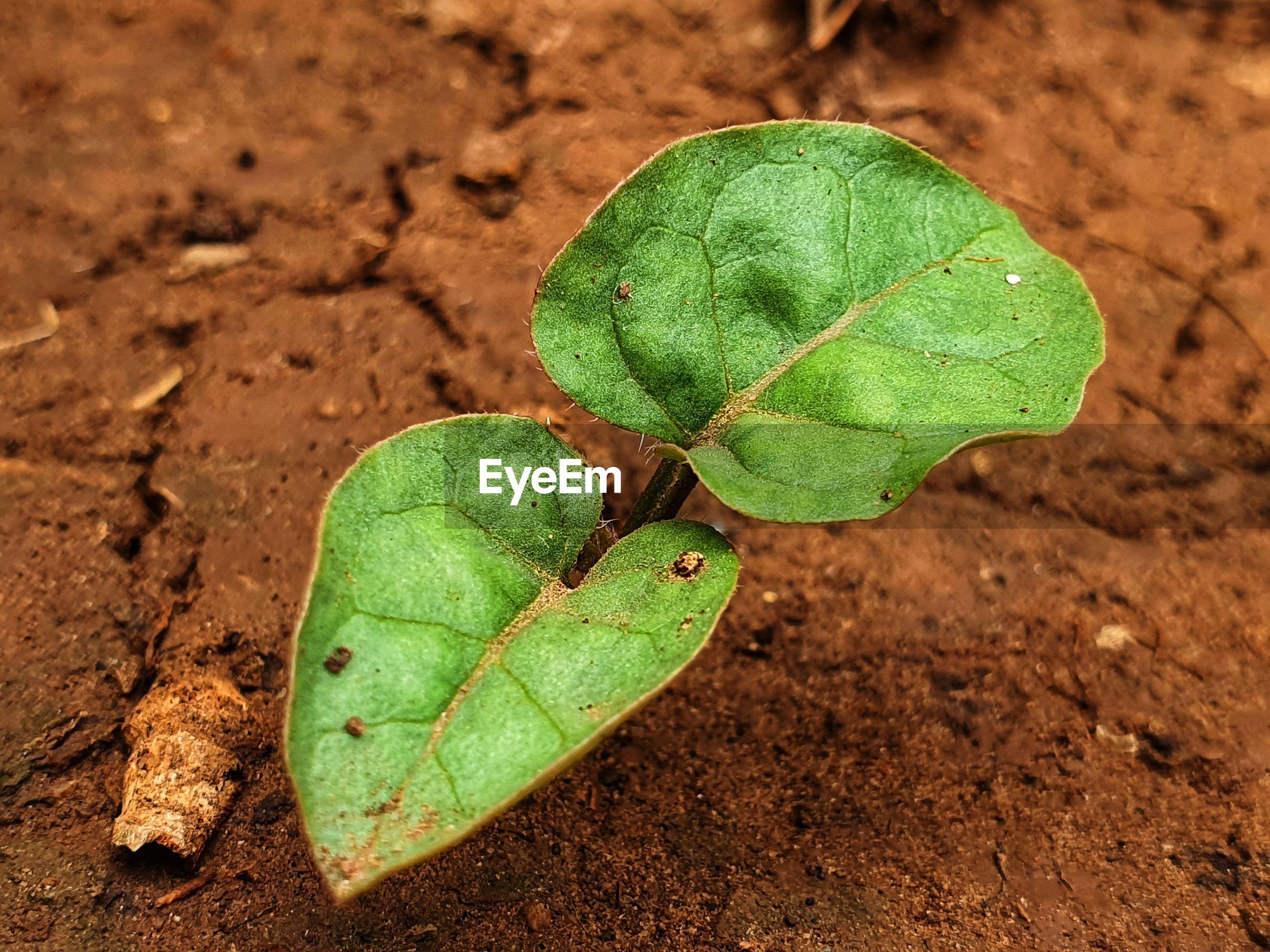 Close-up of green leaf on land