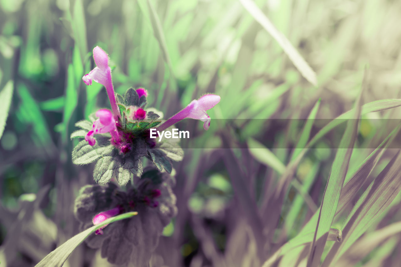 flower, growth, nature, plant, blooming, petal, no people, outdoors, fragility, beauty in nature, freshness, day, flower head, close-up