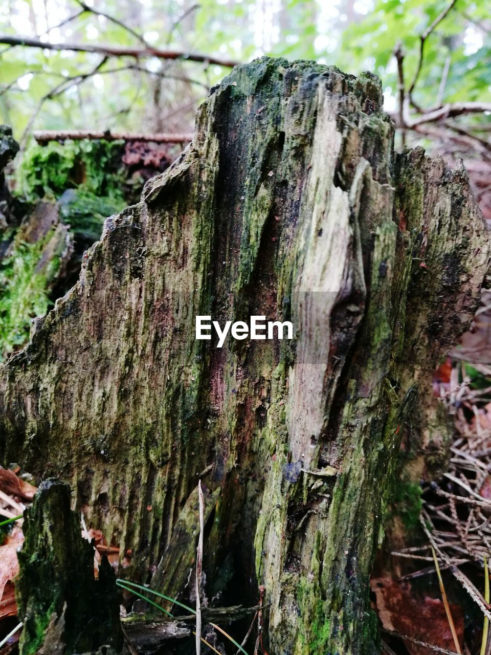 tree trunk, tree, day, no people, nature, growth, close-up, bark, textured, outdoors, moss, lichen, forest, fungus, beauty in nature