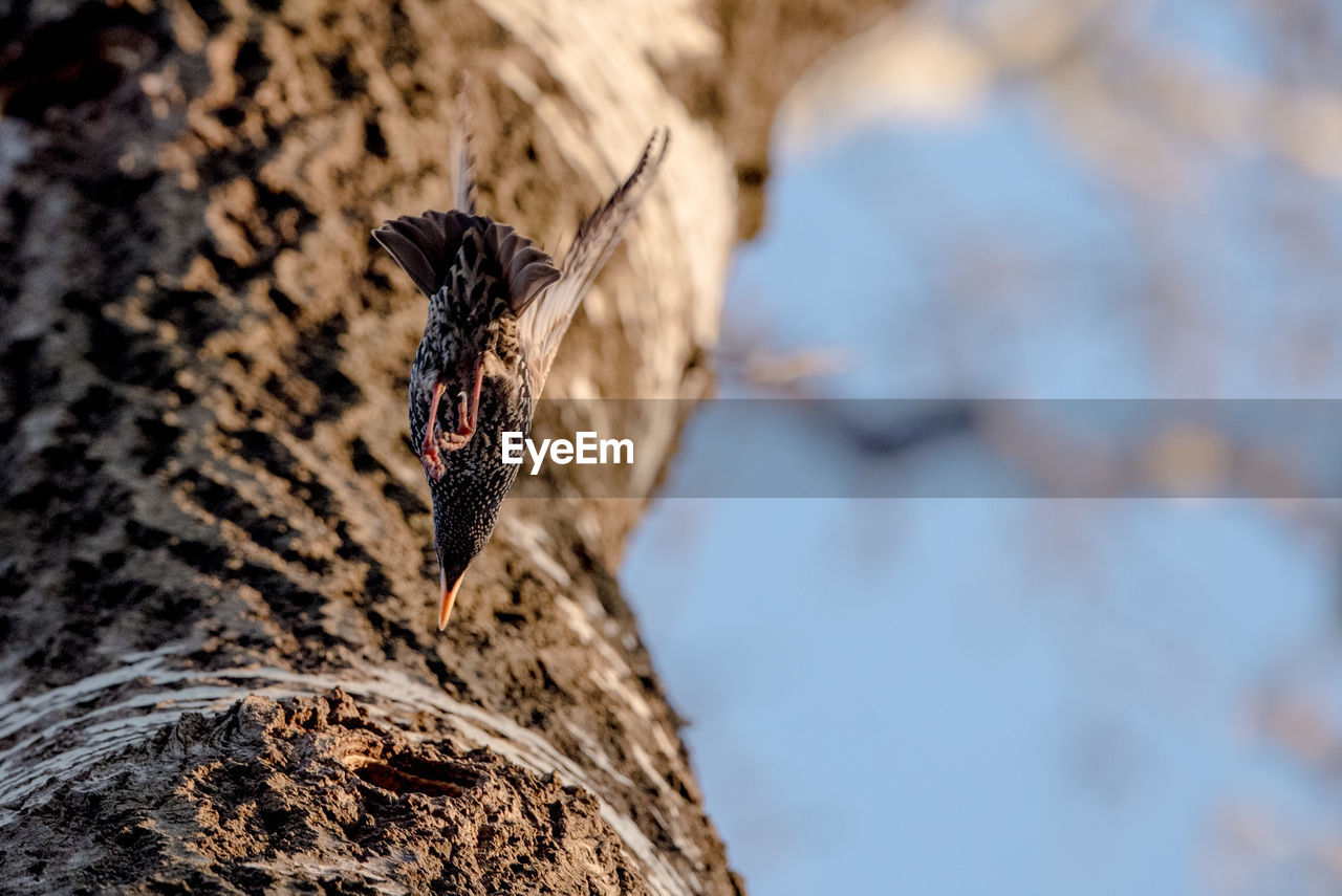animal, animal themes, animals in the wild, animal wildlife, one animal, invertebrate, insect, rock, nature, no people, selective focus, day, rock - object, focus on foreground, animal wing, close-up, solid, tree trunk, beauty in nature, trunk, outdoors, butterfly - insect