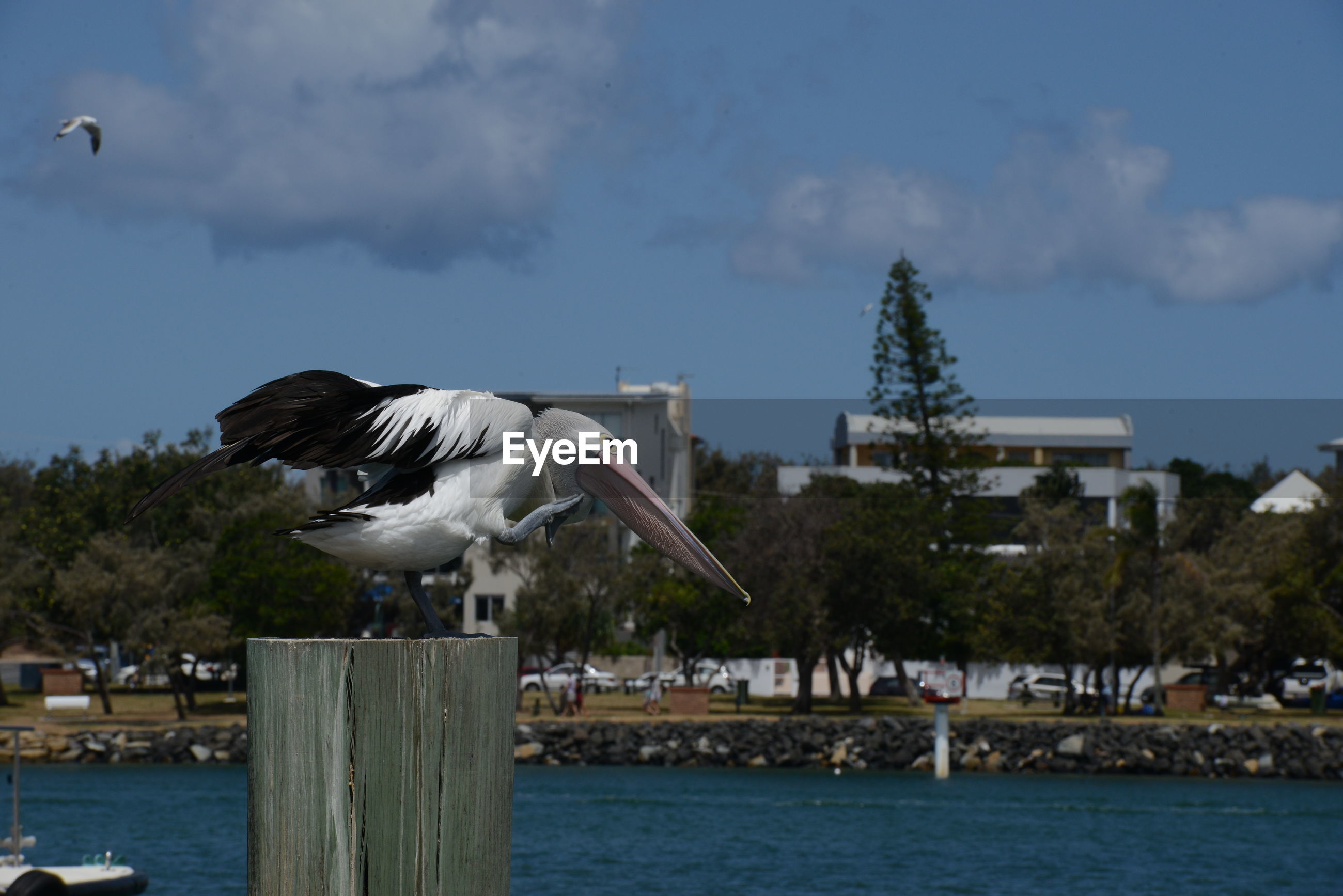 SEAGULL FLYING OVER WOODEN POST