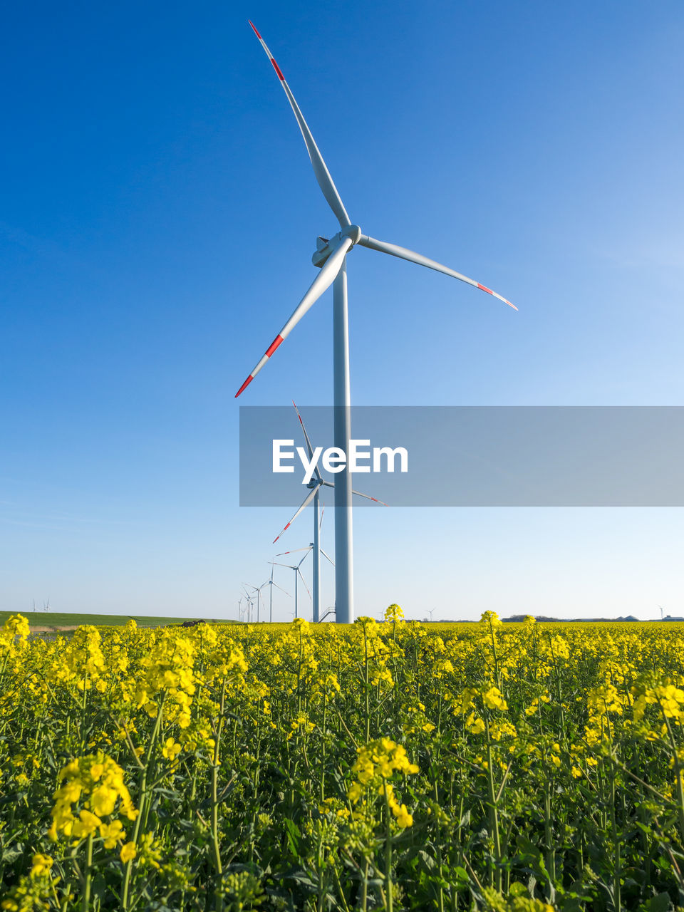 fuel and power generation, environment, wind turbine, yellow, turbine, landscape, renewable energy, rural scene, environmental conservation, alternative energy, wind power, sky, field, agriculture, beauty in nature, flower, farm, land, oilseed rape, nature, no people, outdoors, springtime, flower head