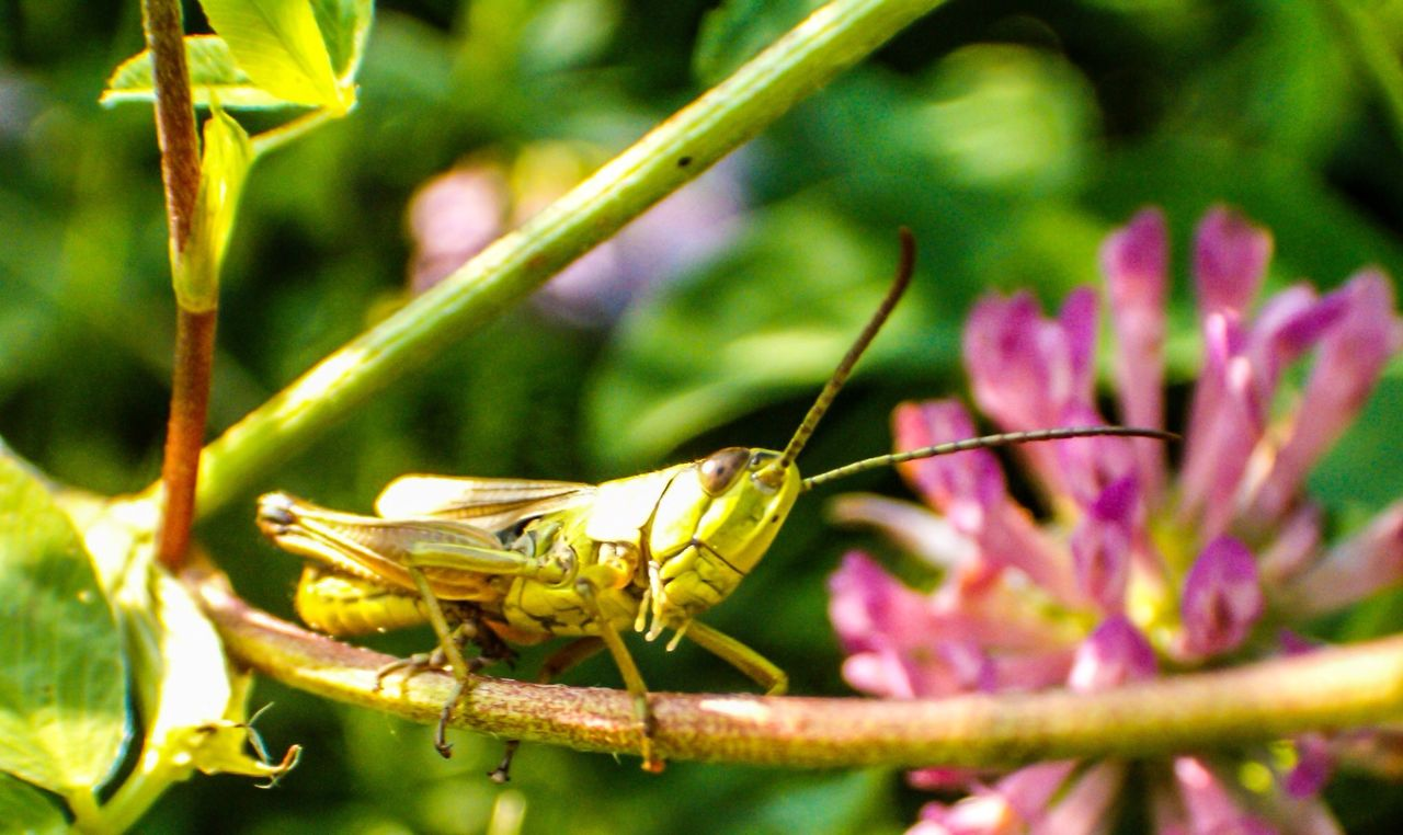 insect, animal themes, animals in the wild, one animal, plant, close-up, growth, no people, nature, animal wildlife, flower, outdoors, focus on foreground, day, beauty in nature, green color, leaf, fragility, freshness, perching, flower head