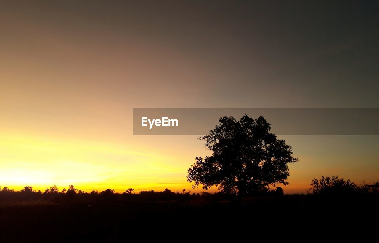 sky, silhouette, sunset, tranquility, tree, tranquil scene, scenics - nature, beauty in nature, plant, landscape, orange color, environment, non-urban scene, field, nature, land, no people, idyllic, growth, outdoors