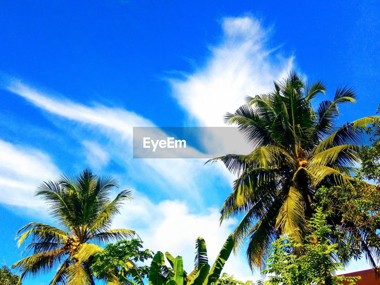 tree, palm tree, tropical climate, sky, plant, low angle view, beauty in nature, cloud - sky, growth, nature, day, no people, blue, coconut palm tree, tranquility, leaf, scenics - nature, sunlight, green color, tranquil scene, tropical tree, palm leaf