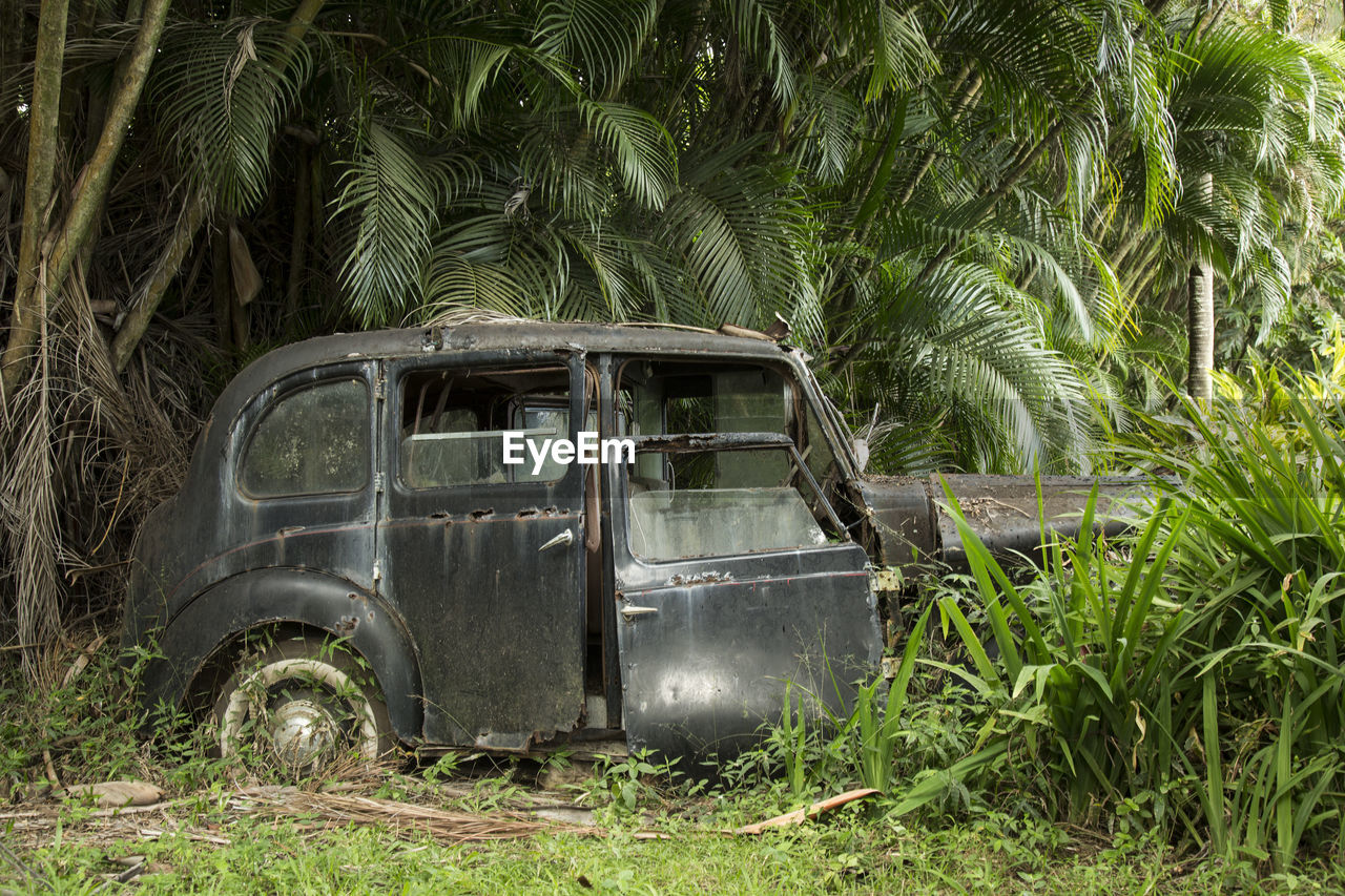 tree, transportation, abandoned, day, growth, field, no people, green color, outdoors, palm tree, nature