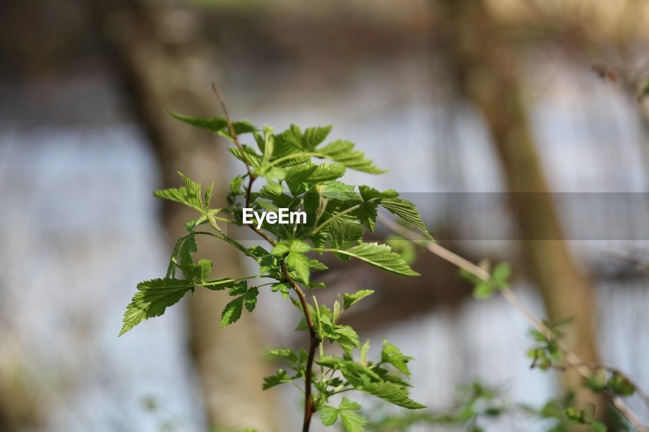 leaf, growth, plant part, plant, green color, close-up, nature, focus on foreground, no people, day, beauty in nature, outdoors, selective focus, beginnings, tranquility, herb, fragility, freshness, vulnerability, twig, leaves, small