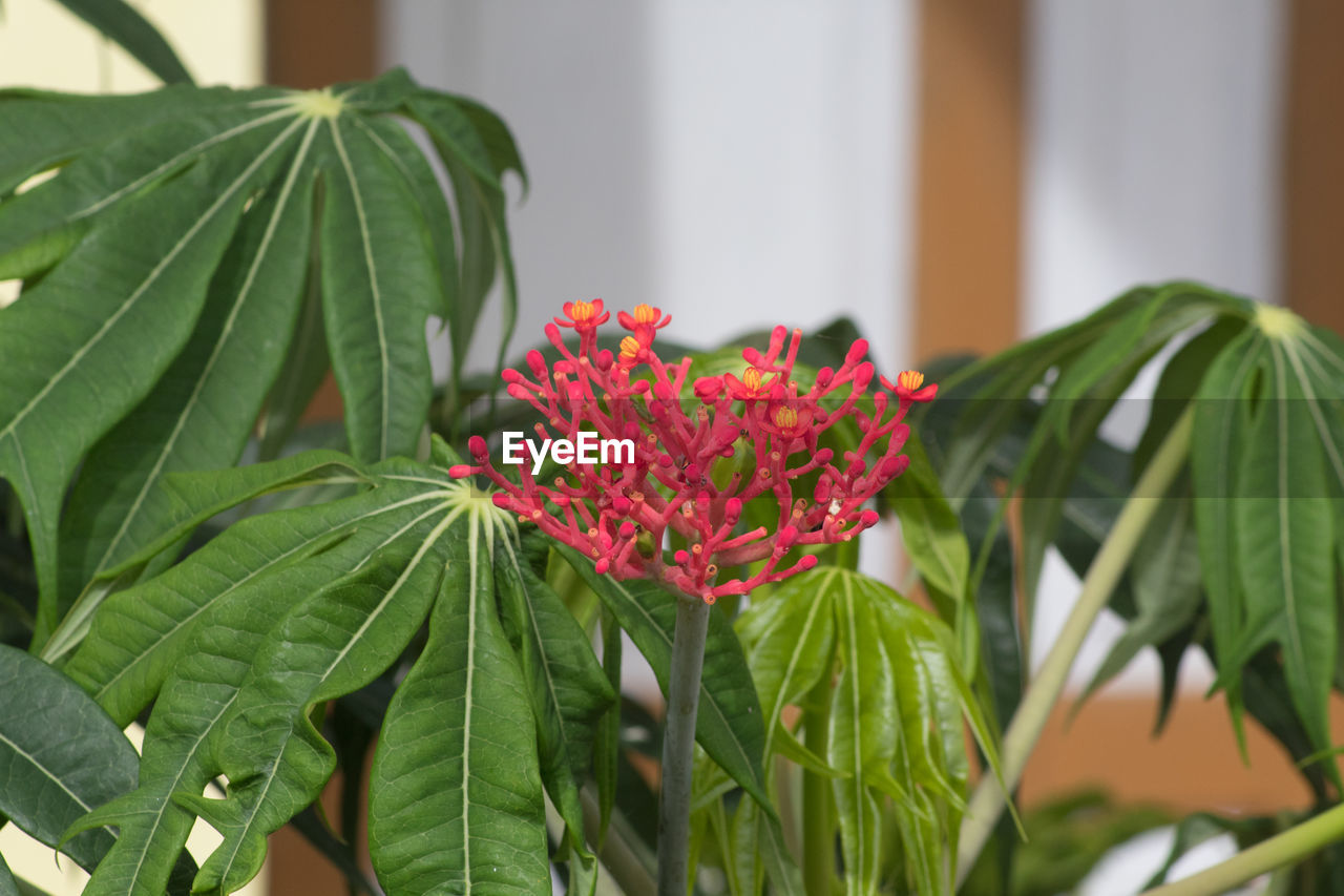 leaf, plant, plant part, growth, flower, freshness, flowering plant, close-up, beauty in nature, green color, focus on foreground, vulnerability, nature, fragility, no people, petal, red, day, flower head, pink color, outdoors