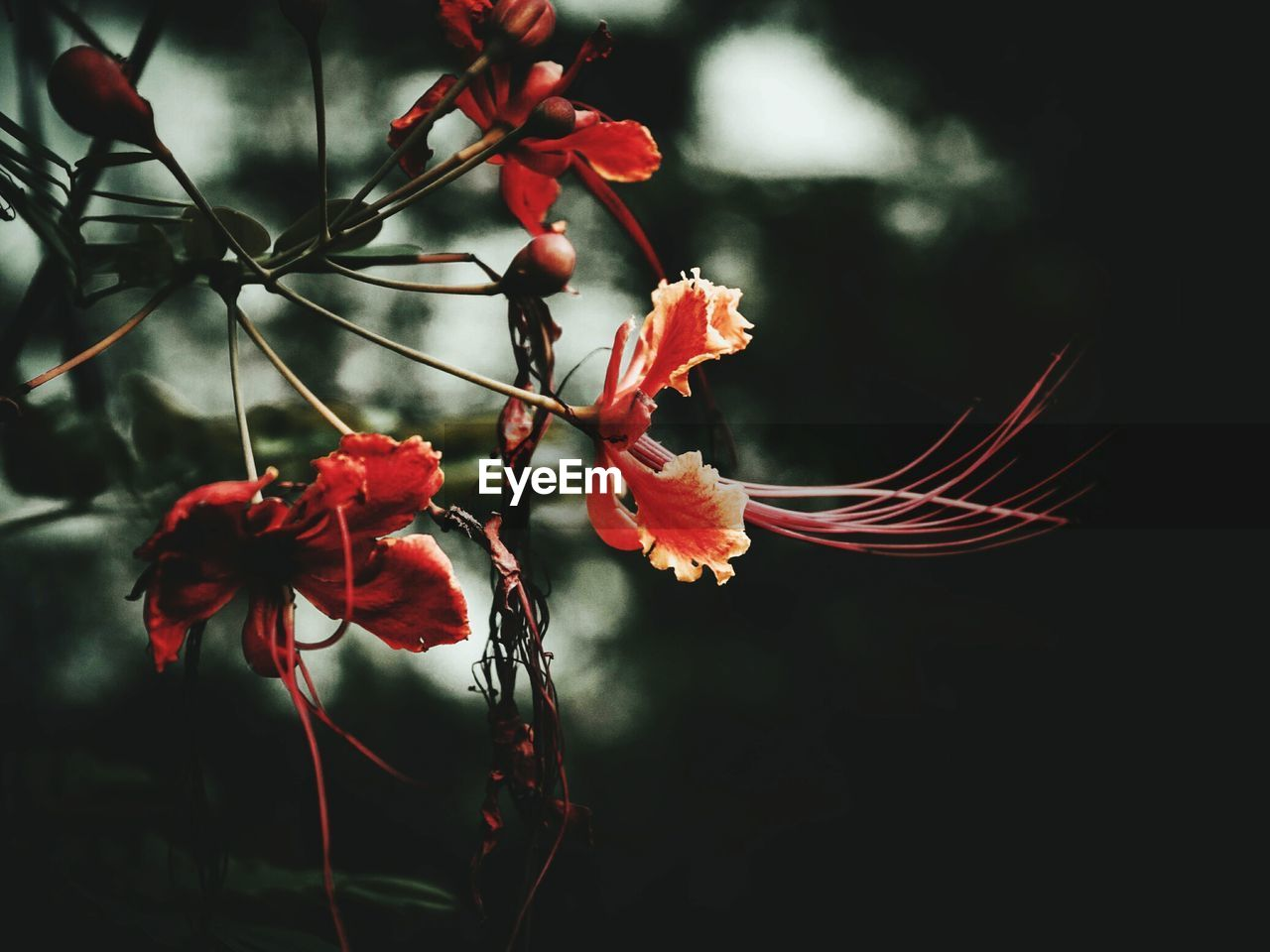 flower, growth, fragility, petal, beauty in nature, red, plant, nature, no people, close-up, flower head, outdoors, day, freshness, tree