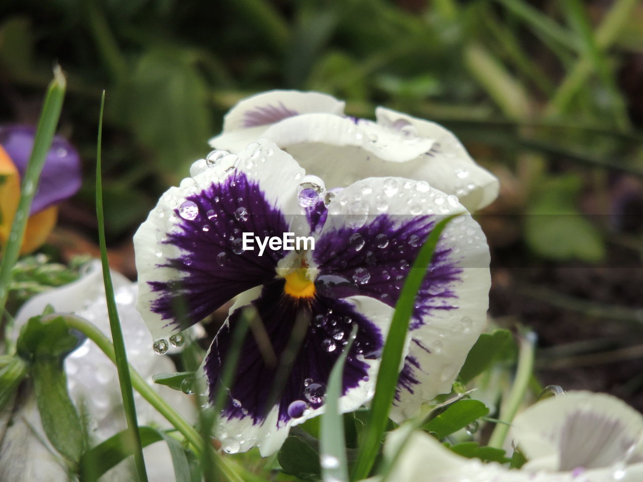 flower, petal, fragility, growth, freshness, beauty in nature, nature, plant, purple, flower head, no people, close-up, outdoors, day, animal themes, one animal, blooming, crocus