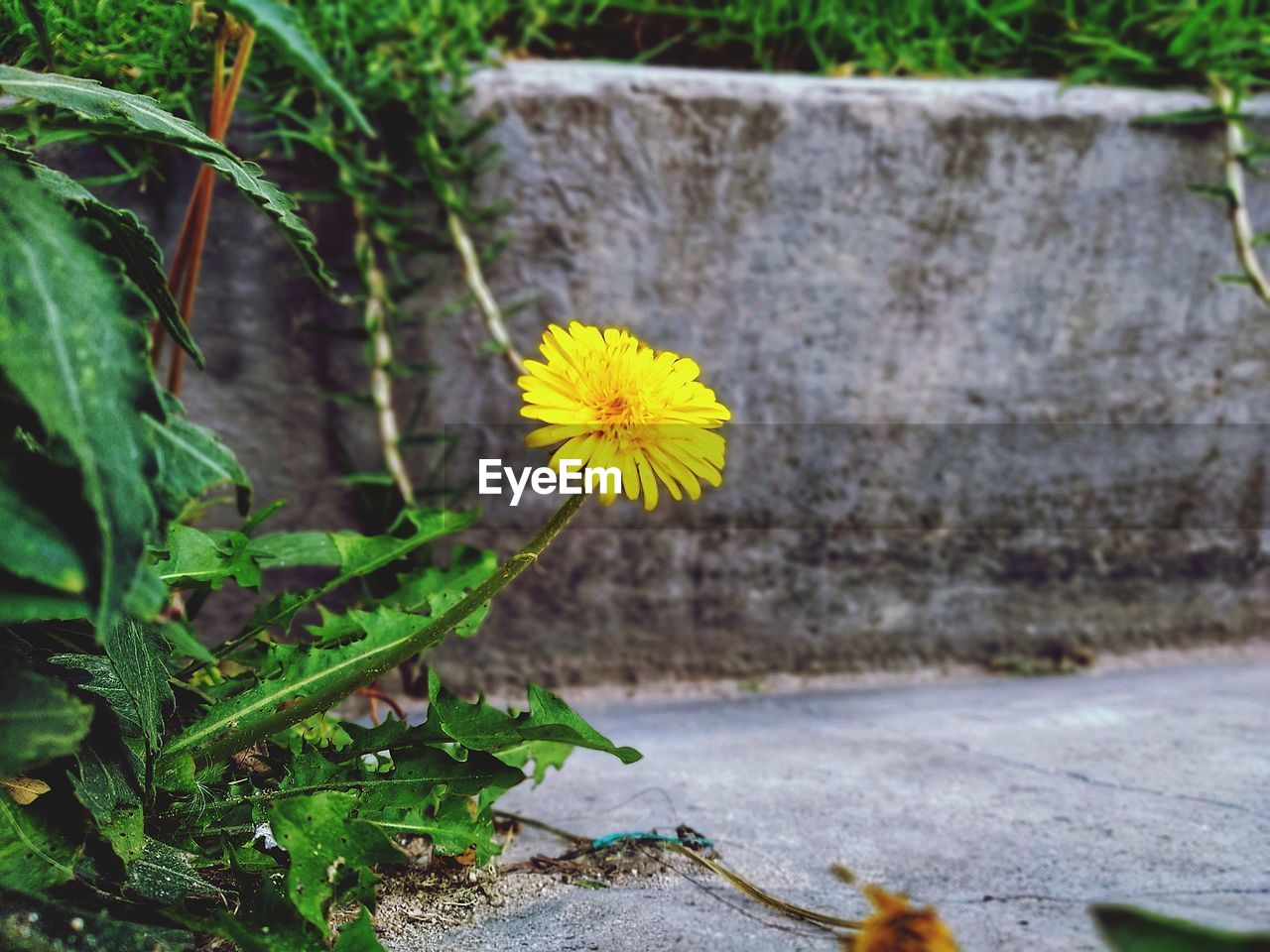 plant, flowering plant, flower, growth, yellow, fragility, freshness, vulnerability, beauty in nature, inflorescence, petal, nature, flower head, plant part, leaf, close-up, focus on foreground, no people, day, outdoors