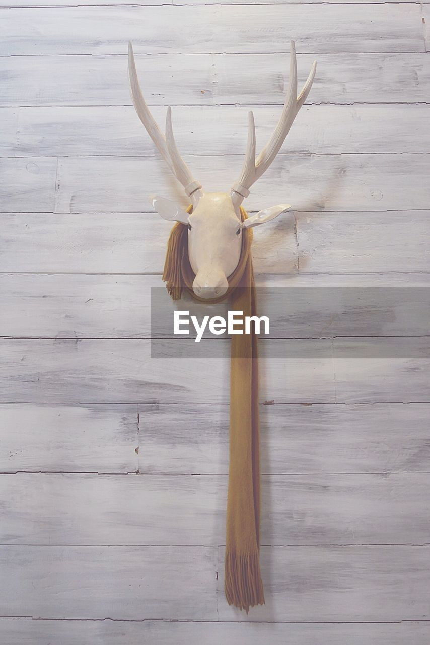 wood - material, animal, one animal, animal themes, animal wildlife, no people, animal body part, horned, mammal, indoors, wall - building feature, taxidermy, antler, close-up, mounted, single object, animal head, day, hanging