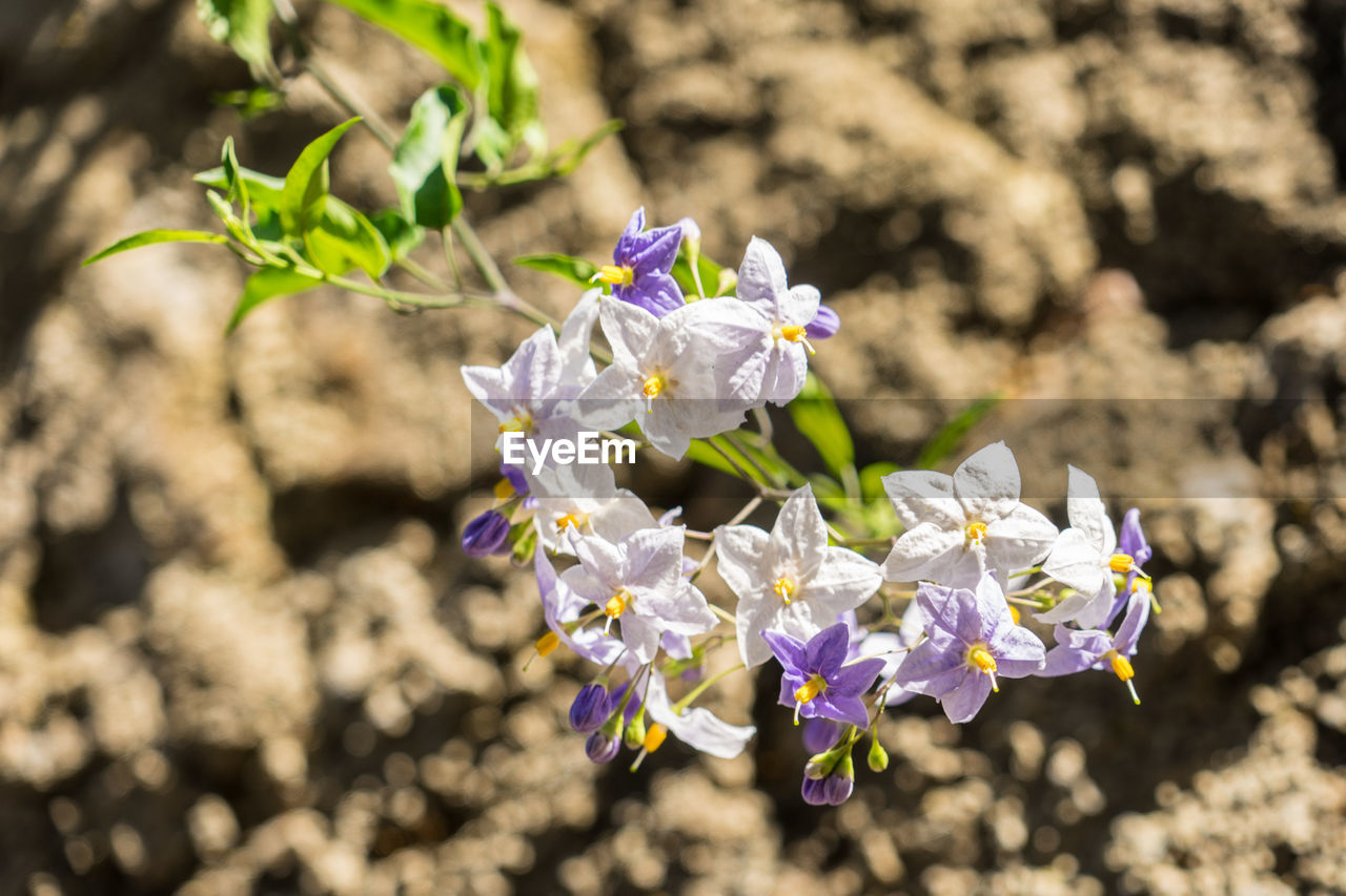 flowering plant, flower, vulnerability, fragility, freshness, plant, beauty in nature, growth, petal, close-up, flower head, day, nature, inflorescence, focus on foreground, no people, selective focus, outdoors, field, sunlight, purple