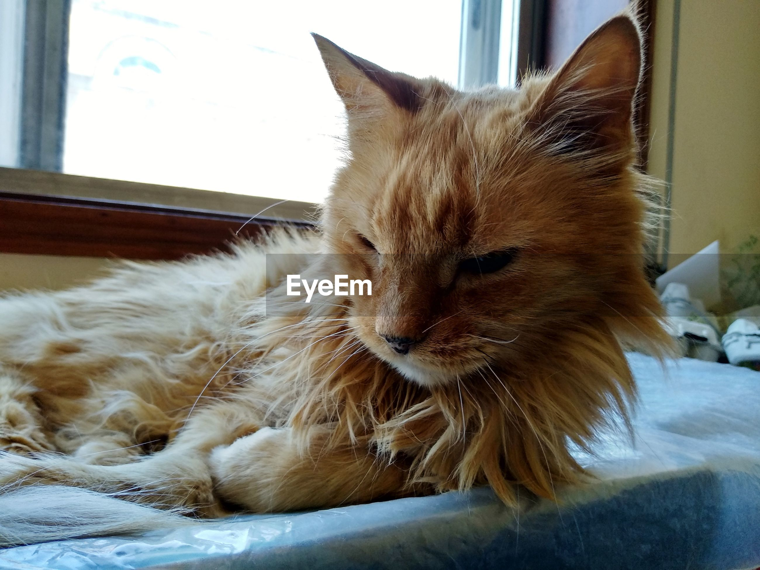 domestic, mammal, pets, domestic animals, animal themes, vertebrate, animal, one animal, cat, domestic cat, feline, relaxation, furniture, indoors, no people, home interior, bed, resting, close-up, whisker, ginger cat