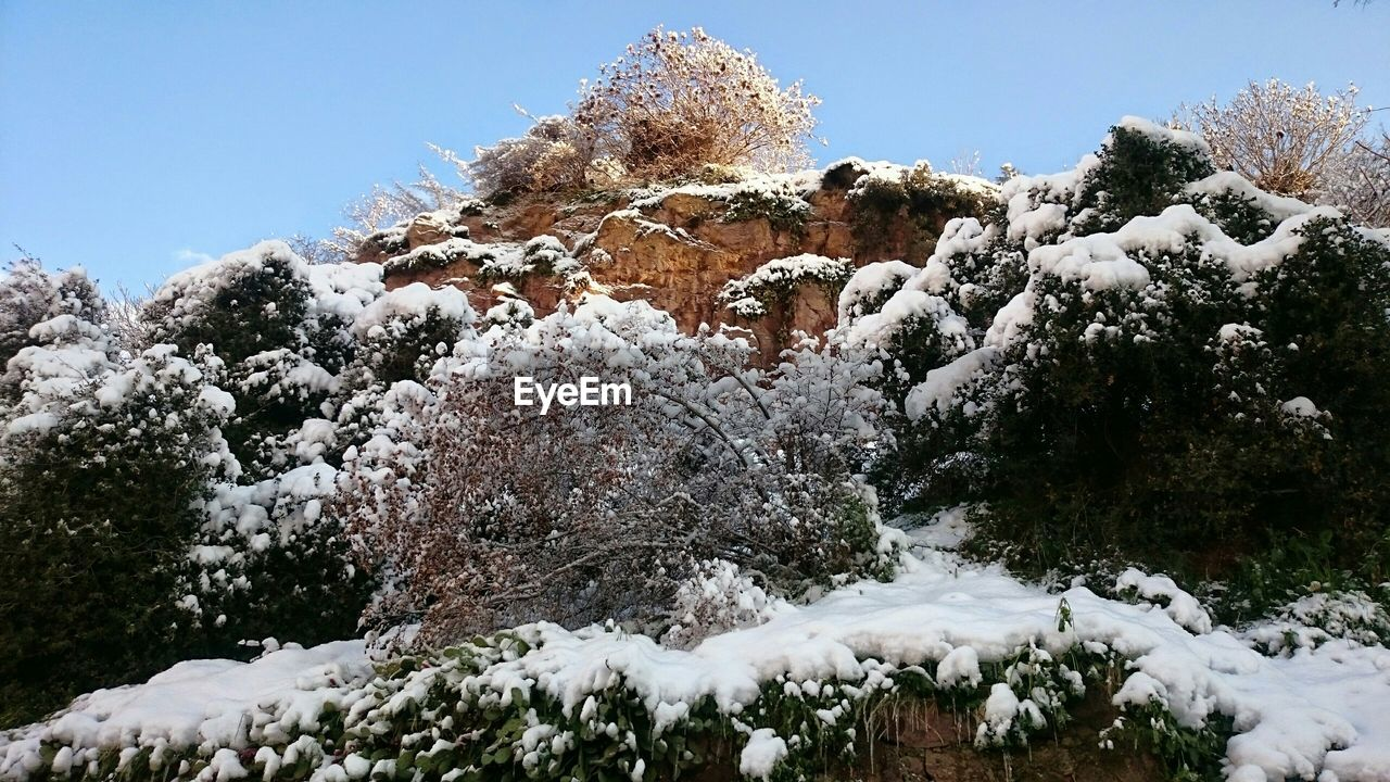 Snow Covered Plants On Rocks