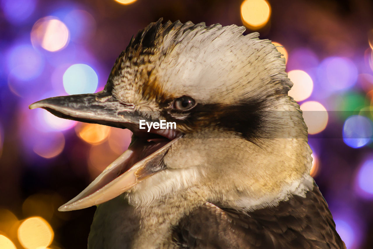 focus on foreground, bird, close-up, animal themes, one animal, night, animals in the wild, beak, animal wildlife, outdoors, no people, illuminated