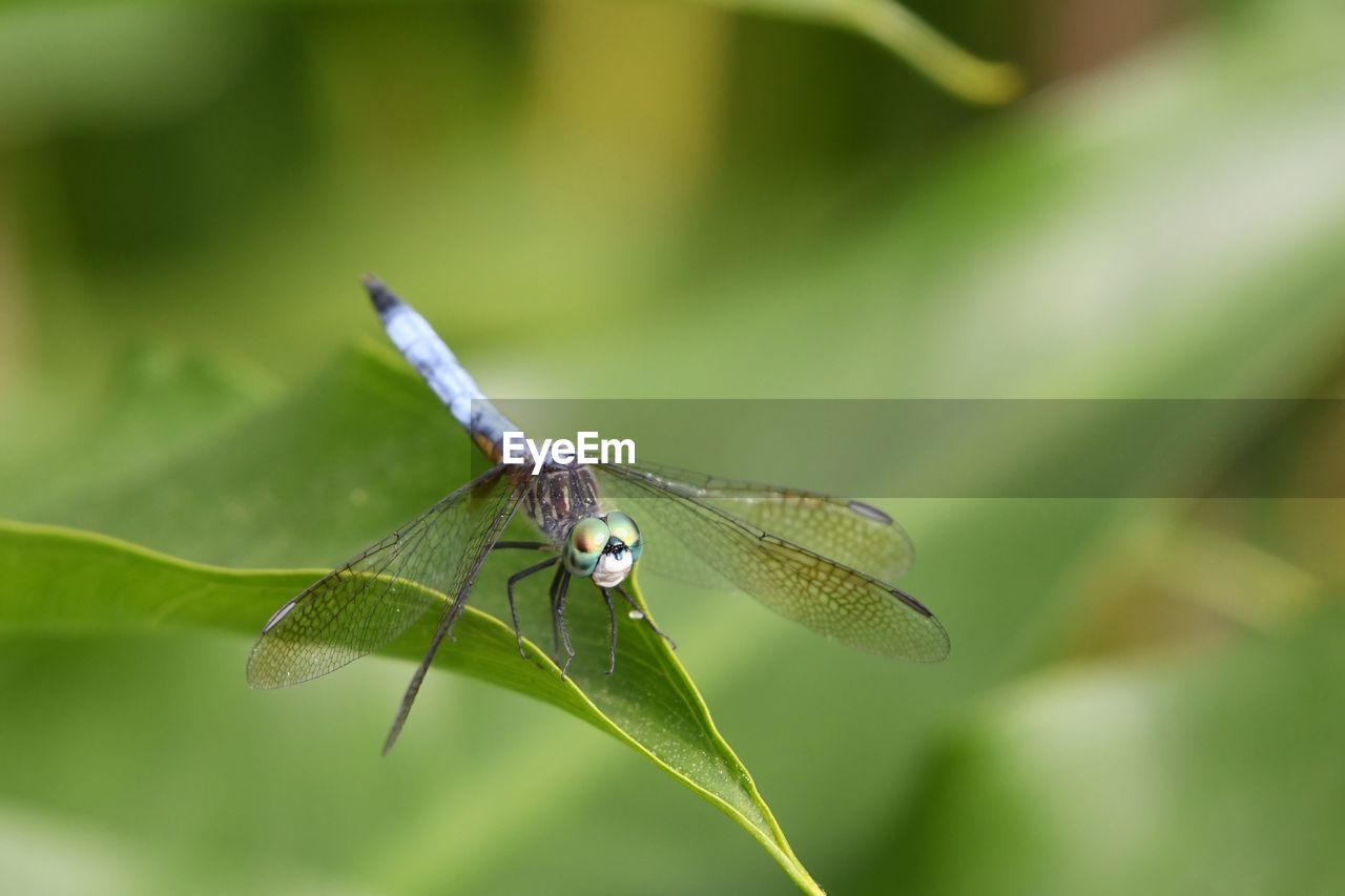 invertebrate, animal themes, animals in the wild, insect, animal wildlife, one animal, animal, animal wing, plant part, leaf, green color, plant, close-up, day, beauty in nature, nature, growth, no people, selective focus, focus on foreground, moth, butterfly, butterfly - insect