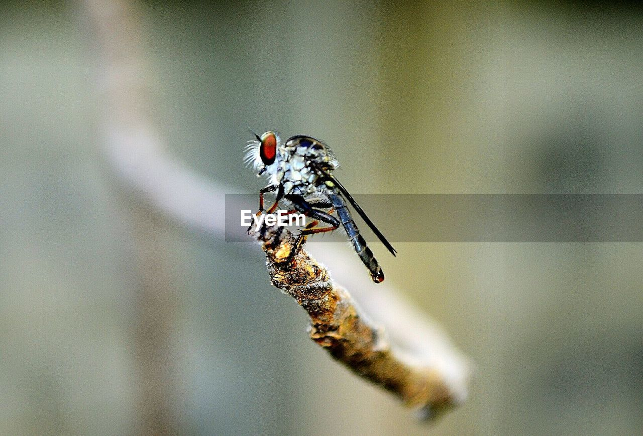 animals in the wild, invertebrate, animal themes, insect, animal wildlife, animal, one animal, close-up, focus on foreground, no people, selective focus, day, animal wing, outdoors, nature, beauty in nature, plant, animal body part, full length, animal markings
