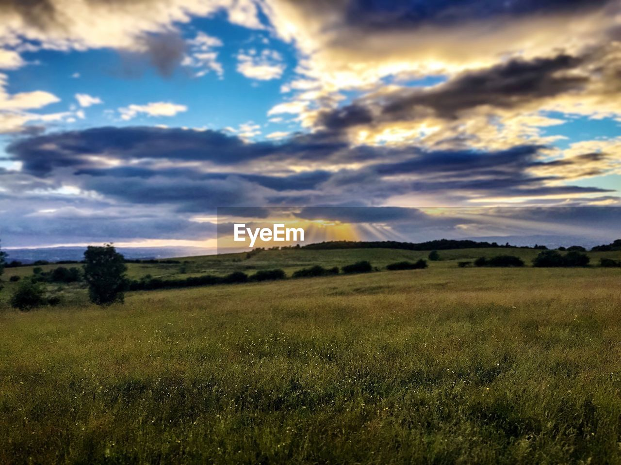 nature, grass, sky, field, landscape, cloud - sky, sunset, beauty in nature, scenics, no people, summer, outdoors, tree, day