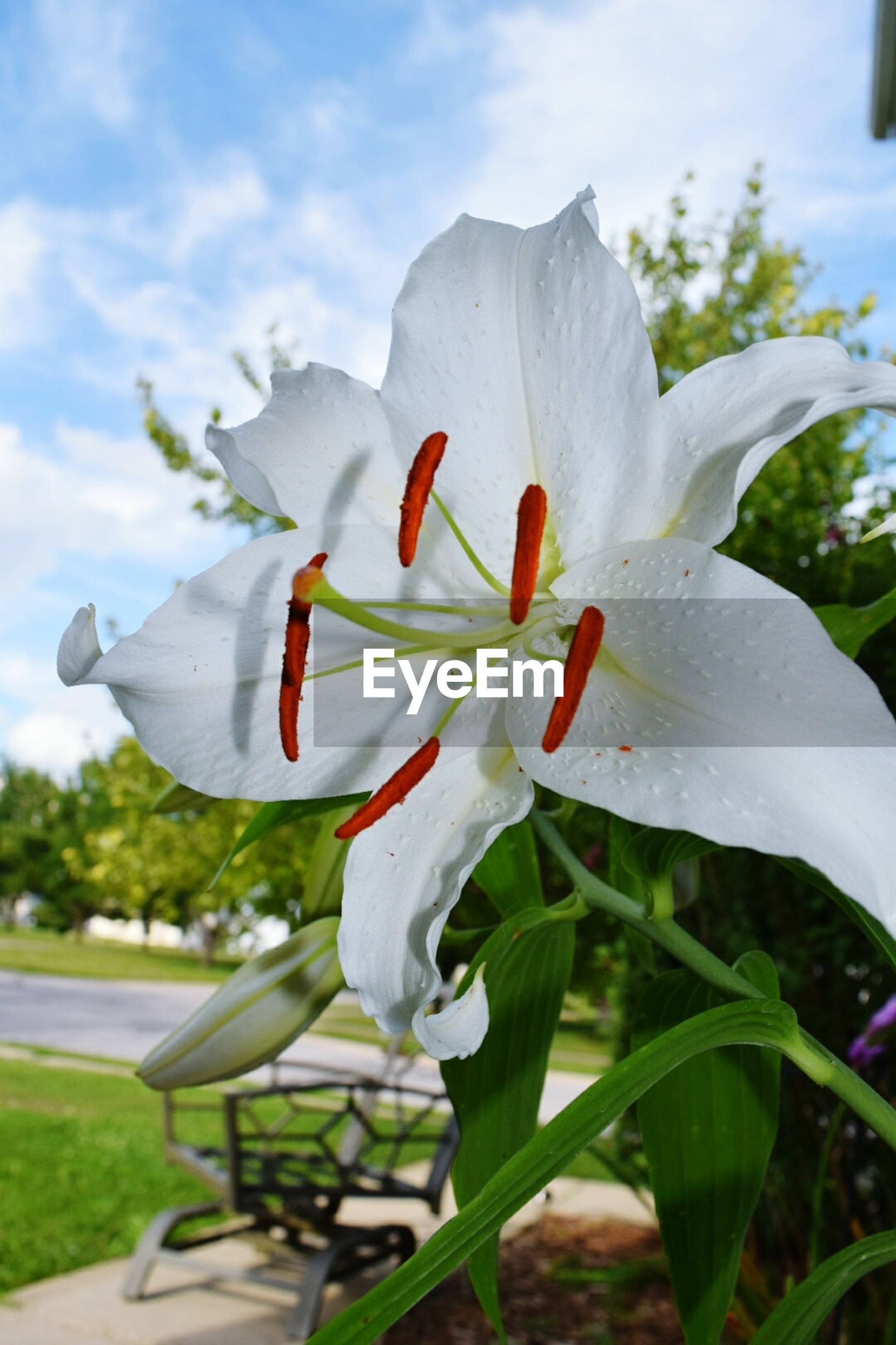 flower, petal, freshness, flower head, fragility, white color, growth, beauty in nature, close-up, blooming, focus on foreground, nature, pollen, plant, in bloom, stamen, day, blossom, stem, no people, sky, outdoors, white, botany, selective focus, softness