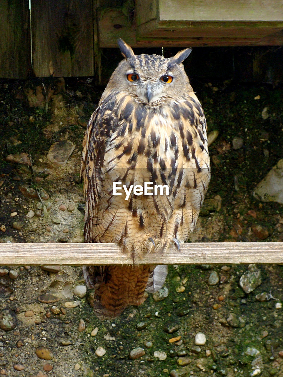 animal themes, animal, one animal, animal wildlife, animals in the wild, bird, vertebrate, day, portrait, no people, looking at camera, animals in captivity, bird of prey, owl, mammal, nature, animal body part, outdoors, zoo, front view, animal head